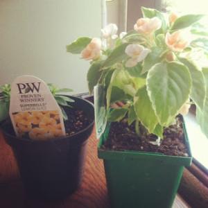 Plants_BSmith